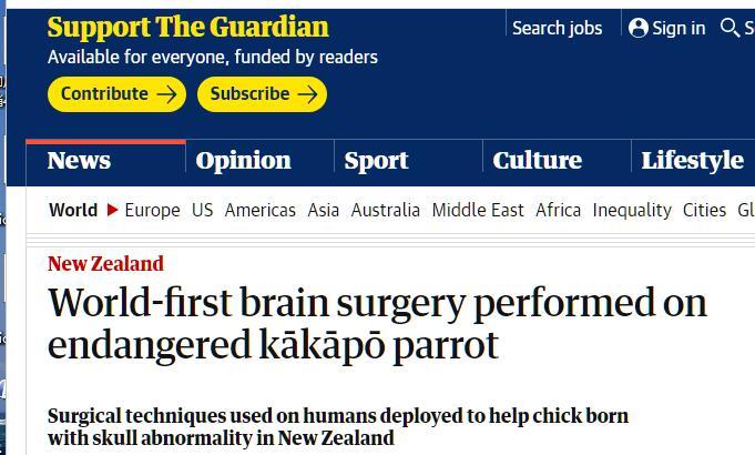 全球首例鸟类脑部手术在新西兰取得成功