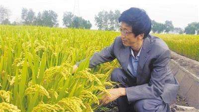 """张瑞宏: 给稻田加点""""智慧"""""""