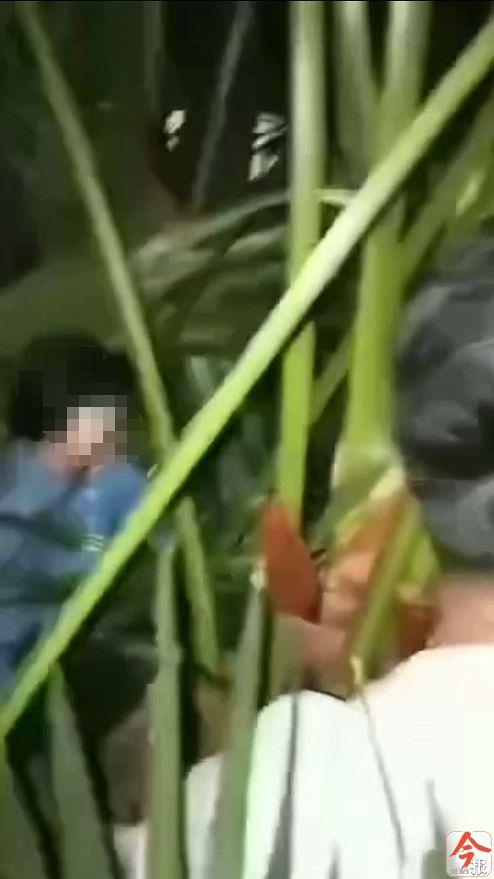 广西4岁双胞胎从17楼坠下奇迹生还,花圃植物起