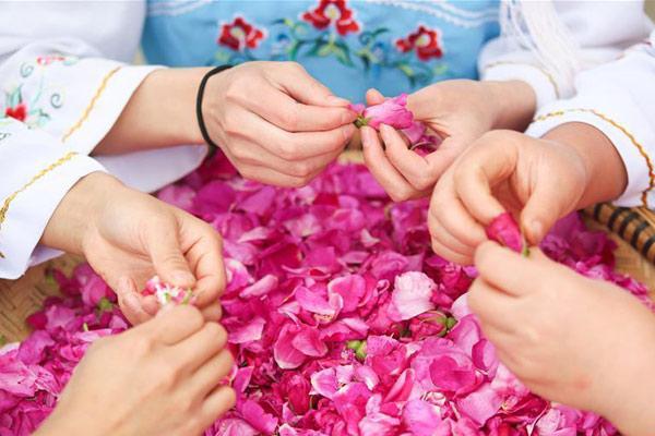 贵州大方:小小山村玫瑰香