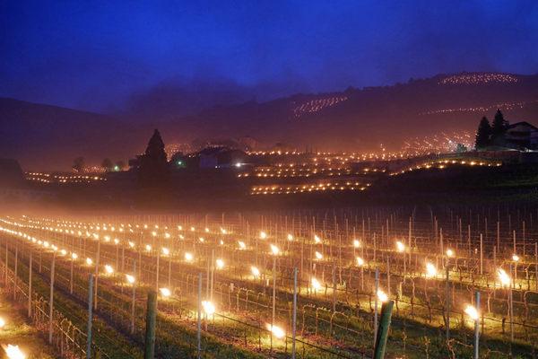 意大利酒庄为葡萄防冻点亮300只提灯 星火唯美