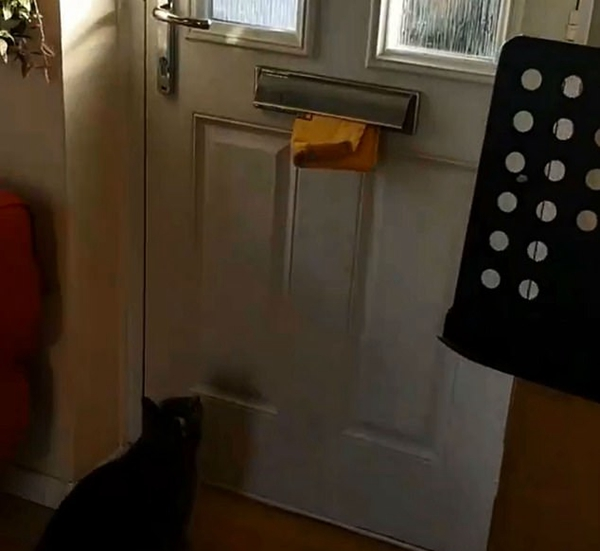 热心邮差!英一家猫跳起从门洞取包裹送到楼上