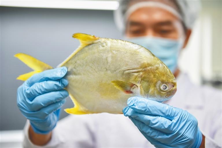 扫描可追溯养殖过程 一条金鲳鱼的大数据之旅