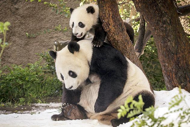 治愈系!世界家庭日围观动物家庭有趣画面