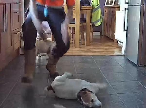 小狗吃奶酪被噎 主人巧用海姆立克法救其性命