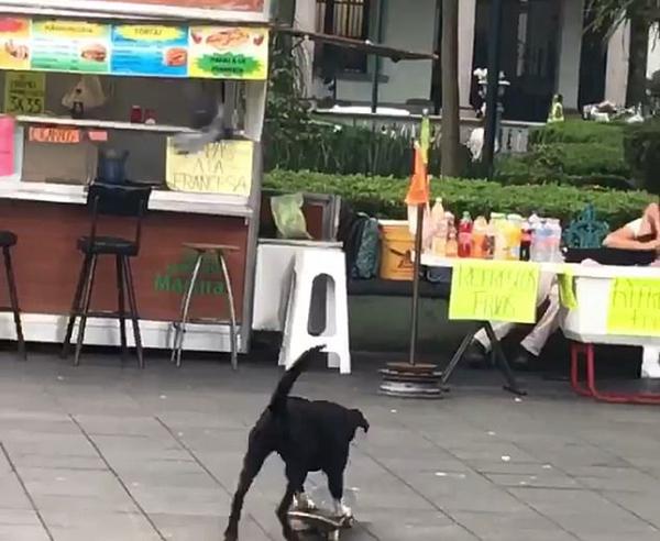 墨西哥一小狗踩滑板冲向饮品摊撞倒众多饮料瓶
