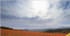 特别的沙漠:令人惊艳的荒野花海