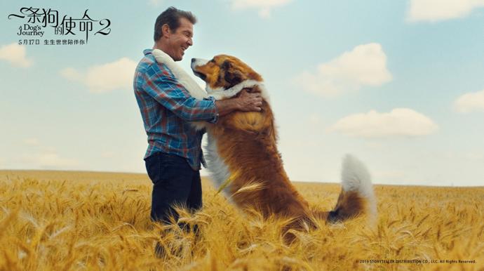 《一条狗的使命2》上映 阿里影业成外片最佳合伙人