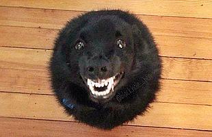 狗狗这么可爱怎能不爱?!