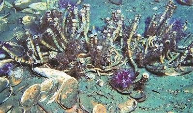 """""""海洋六号""""归来 带回啥神奇生物?"""