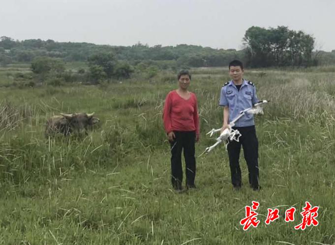 七旬农户丢了牛失魂落魄  警方连续7天出动无人机终找回