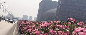 """这些""""黑手""""想毁了杭州这道风景"""