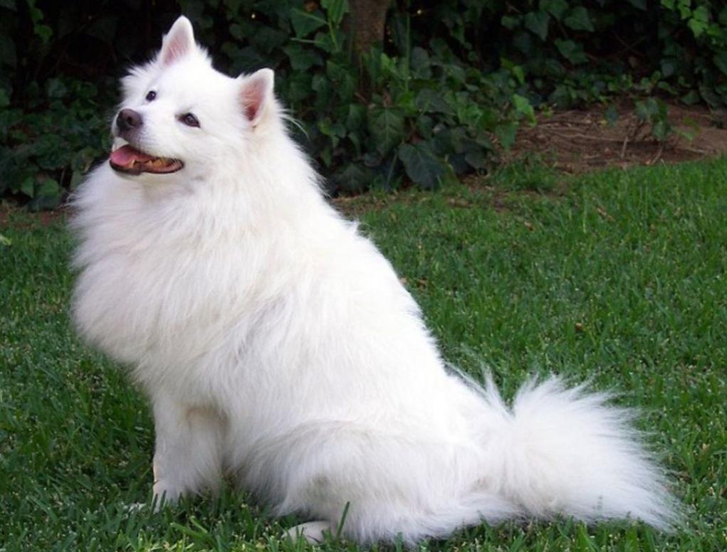 研究稱基因可能會影響一個人決定是否養狗