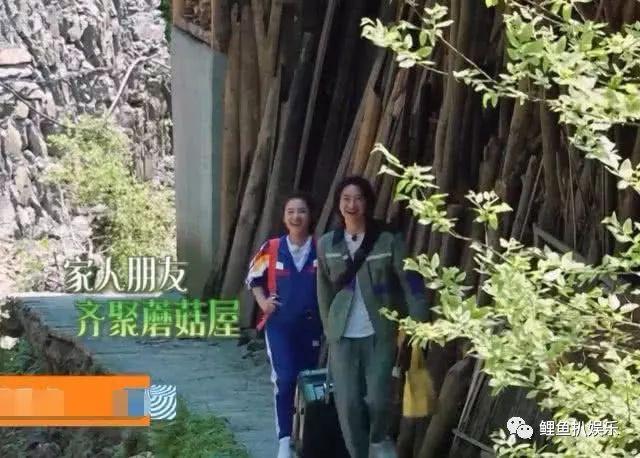 《向往的生活3》迎来身价最高夫妻,听到她对黄磊的称呼,网友:攀不起