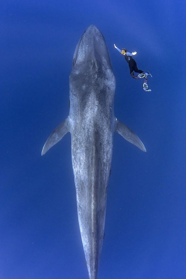 """海底奇遇!摄影师偶遇巨型蓝鲸称其像""""潜艇"""""""
