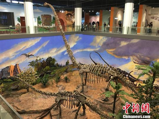 湖北黄石张和恐龙馆开放 展出100件恐龙化石标本