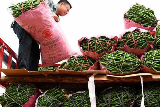 广西柳州:辣椒迎丰收