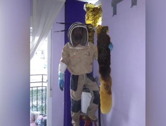 西班牙夫妇家中藏巨大蜂巢 8万只蜜蜂住墙内
