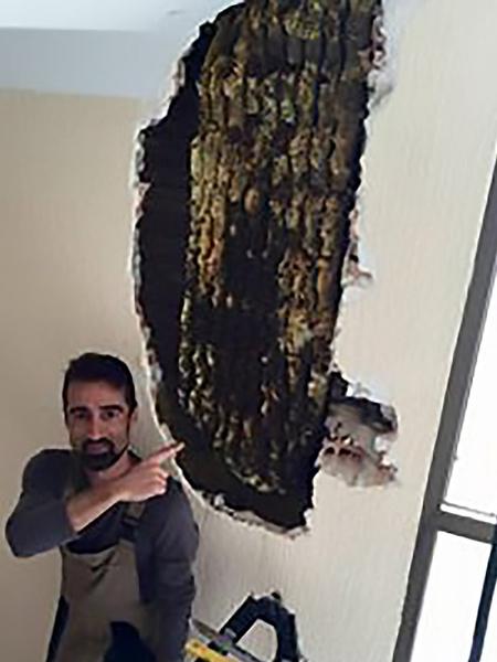 一夫妇遭受两年怪声侵扰 扒开墙后发现8万蜜蜂