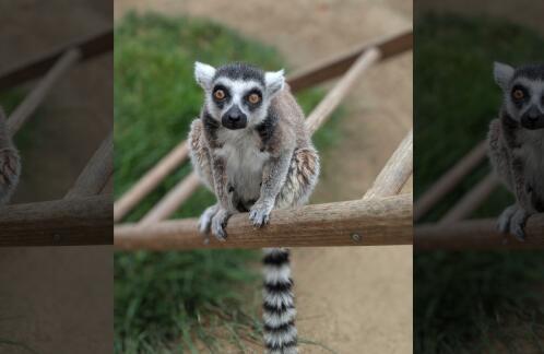 美国青年夜闯动物园偷走濒危动物 或面临1年监禁