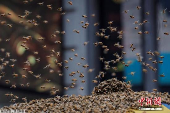 蜜蜂数量下降影响农产 联合国促请各国实施保护