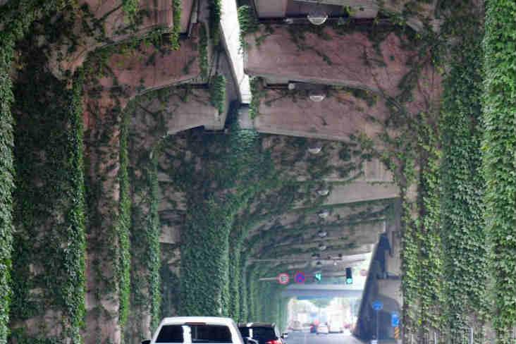 """成都一高架桥爬满爬山虎 车辆如同穿梭""""森林隧道"""""""