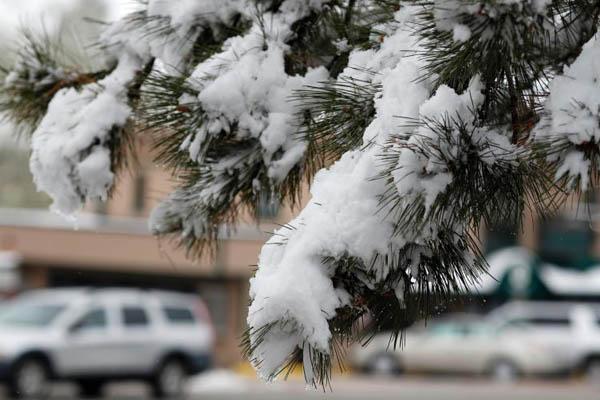 美国科罗拉多州突降大雪 树木被压弯