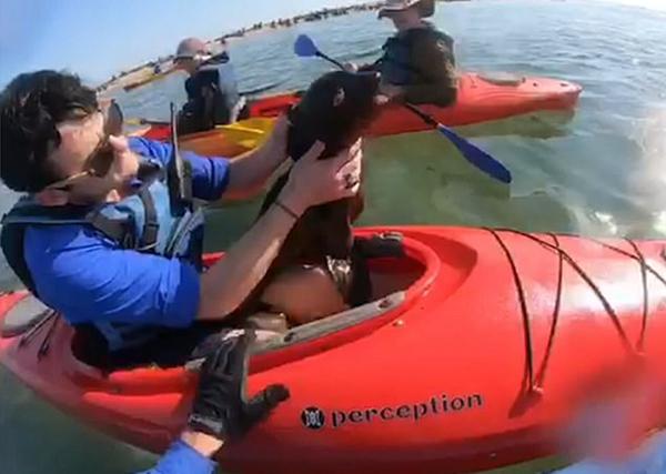 纳米比亚皮滑艇爱好者营救被鱼线绕脖小海豹