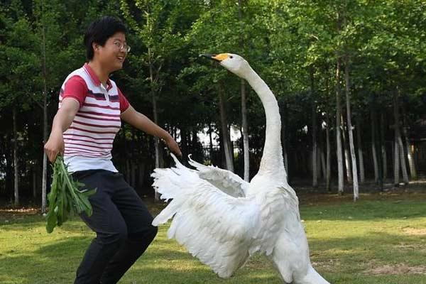 江西南昌:城市里的候鸟风景