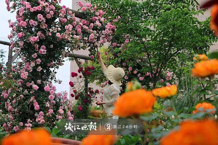羡慕!他为妻子打造超浪漫秘密花园,500多种植物鲜花!只为结婚时一个许诺!