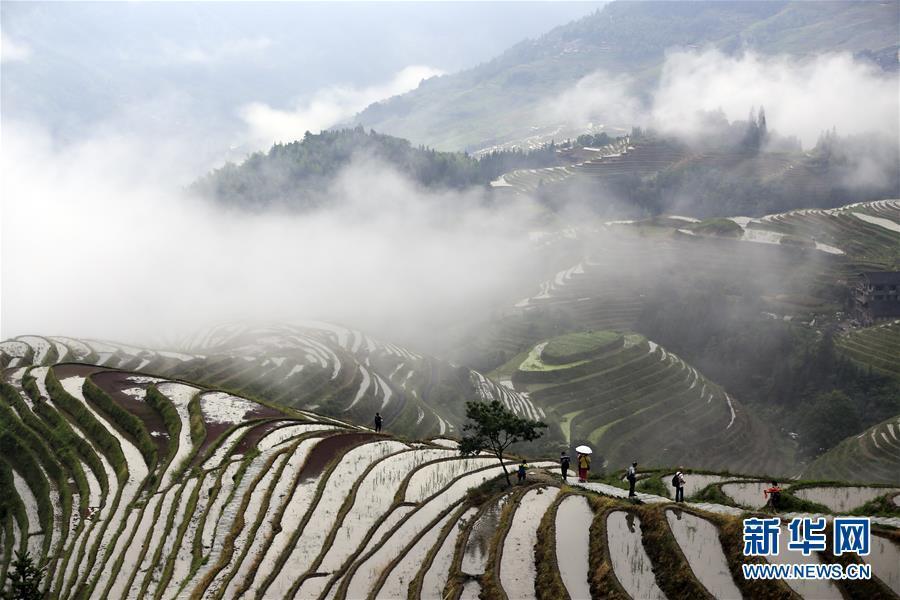 广西龙脊:雨后梯田如仙境