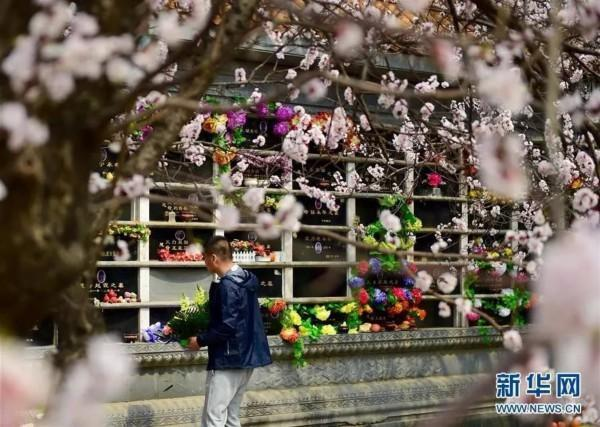 青岛拟禁止焚烧抛撒丧葬祭奠物品,鼓励建设海葬纪念场所祭奠