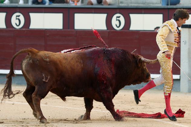 西班牙斗牛节表演惊险连连 斗牛士惨被牛角刺伤