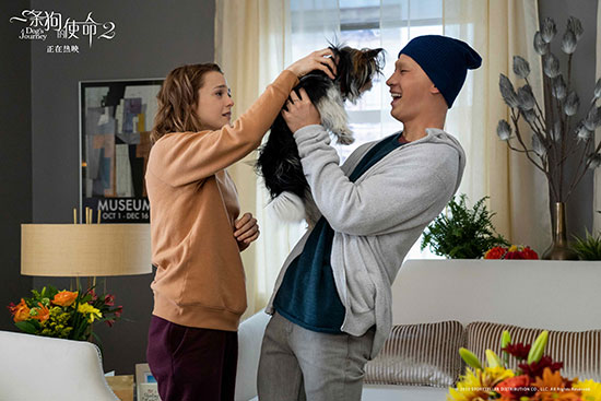 电影《一条狗的使命2》刘宪华光头造型引热议
