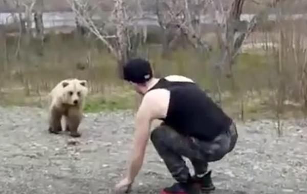 俄罗斯一男子无视禁令下车挑逗棕熊引起众怒