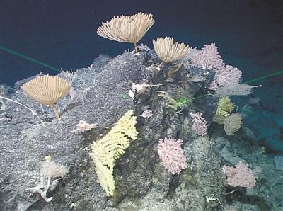 """马里亚纳海沟发现""""海底花园"""""""