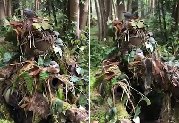 英游戏玩家穿迷彩服 吸引小鸟栖息身上近1小时