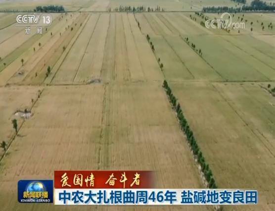 【爱国情 奋斗者】中农大扎根曲周46年 盐碱地变良田