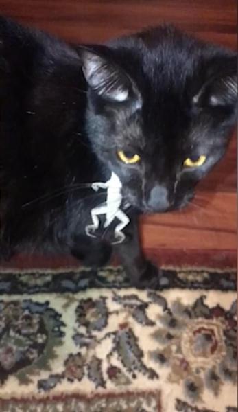 """蜥蜴爬上猫脖子玩""""躲猫猫""""游戏让喵星人抓狂"""