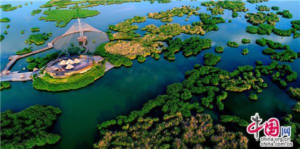 宁夏沙湖:大漠伴碧湖 芦苇接晴空