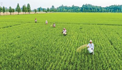 绿色稻米工程助农增收