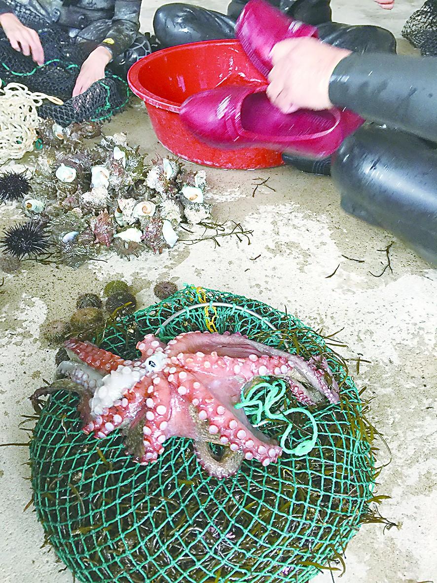 活吃章鱼 韩国极限体验