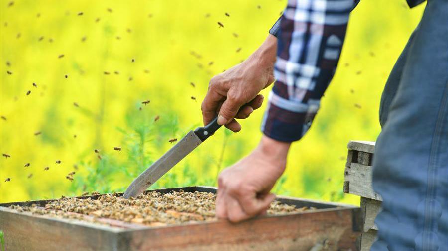 陇南养蜂技术协会 助贫困群众脱贫致富