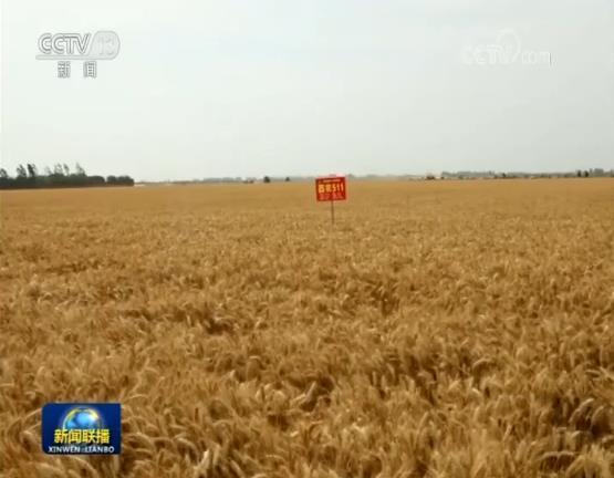 全国夏收加快推进 藏粮于技提高粮食产能