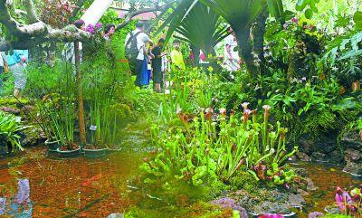 """""""吃虫子的植物""""集体亮相植物馆"""