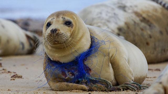 世界环境日:别让生活垃圾对动物造成致命伤害