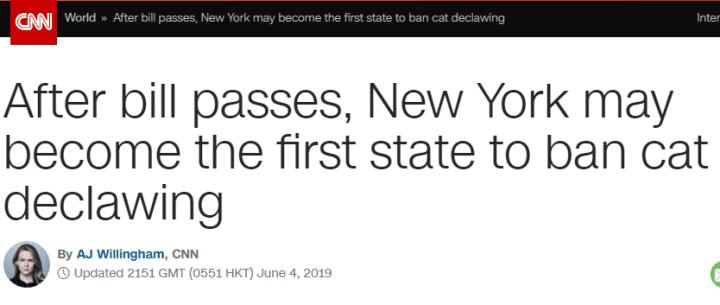 纽约州通过法案,给猫做除爪手术将被罚最多1000美元_德国新闻_德国中文网