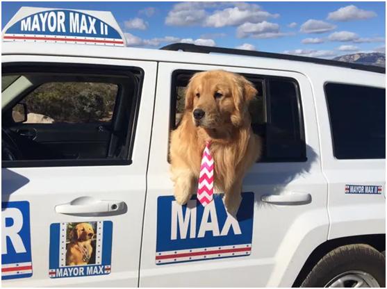 金毛犬出任美國南加州小鎮鎮長,傳遞愛與正能量