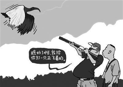 """""""打死朱鹮判重刑""""是一堂野生动物保护课"""