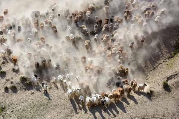 新疆阿勒泰:哈萨克牧民转场夏季牧场